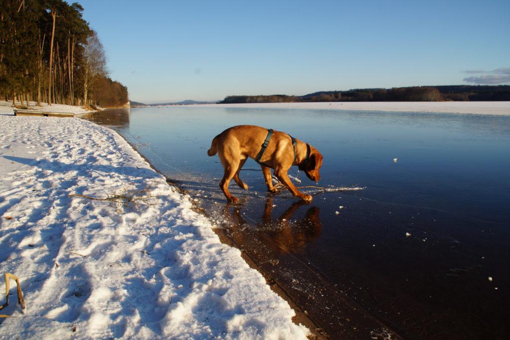 Auch der Hund war ziemlich erstaunt darüber, dass er plötzlich über's Wasser laufen konnte...