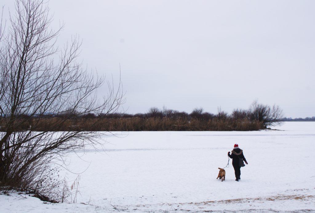 Auch Henry und ich haben einen Spaziergang auf dem Altmühlsee gewagt