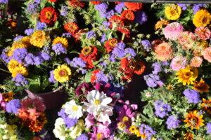 Blumen am Markt in Gunzenhausen
