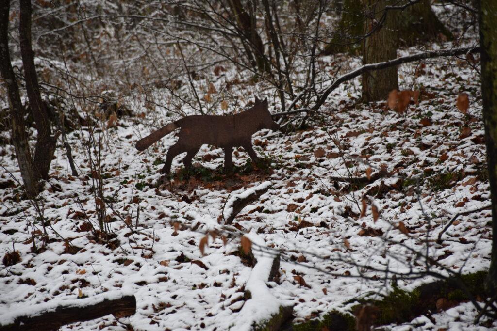 Fuchsfigur im Wald   Foto: Vera Held