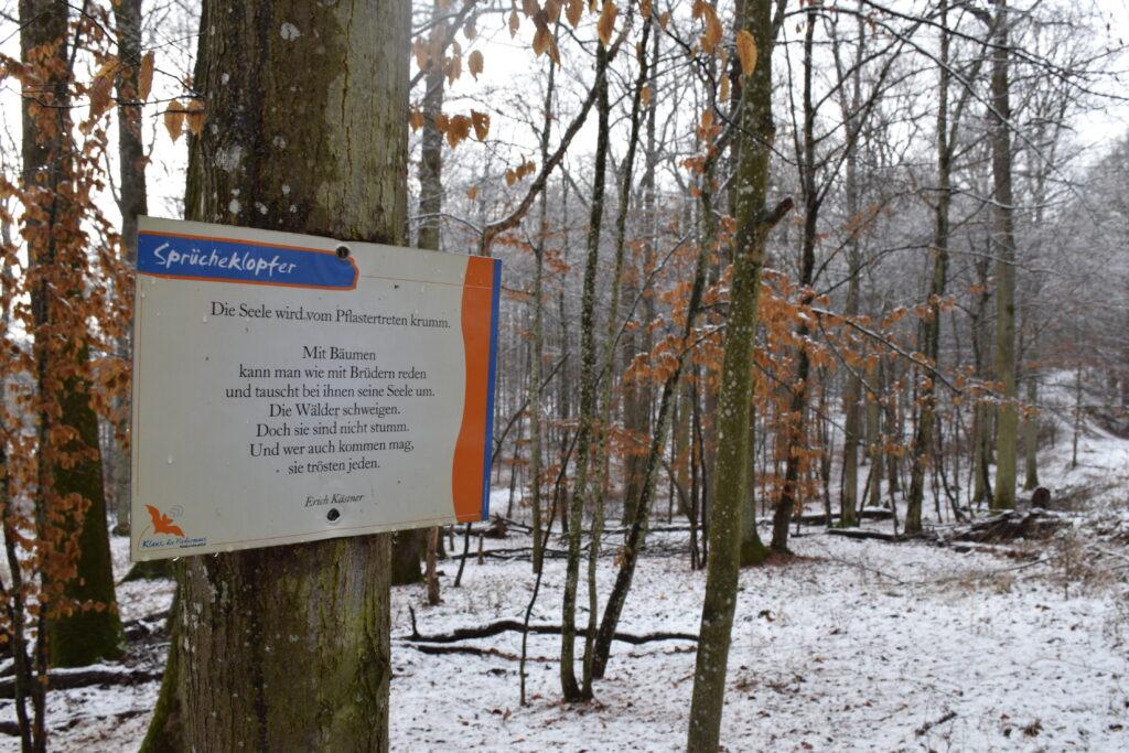 """""""Sprücheklopfer"""" am Walderlebnispfad """"Klaus, die Fledermaus""""   Foto: Vera Held"""