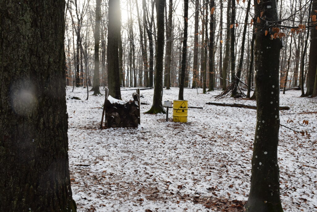 """Umweltstation am Walderlebnispfad """"Klaus, die Fledermaus""""   Foto: Vera Held"""
